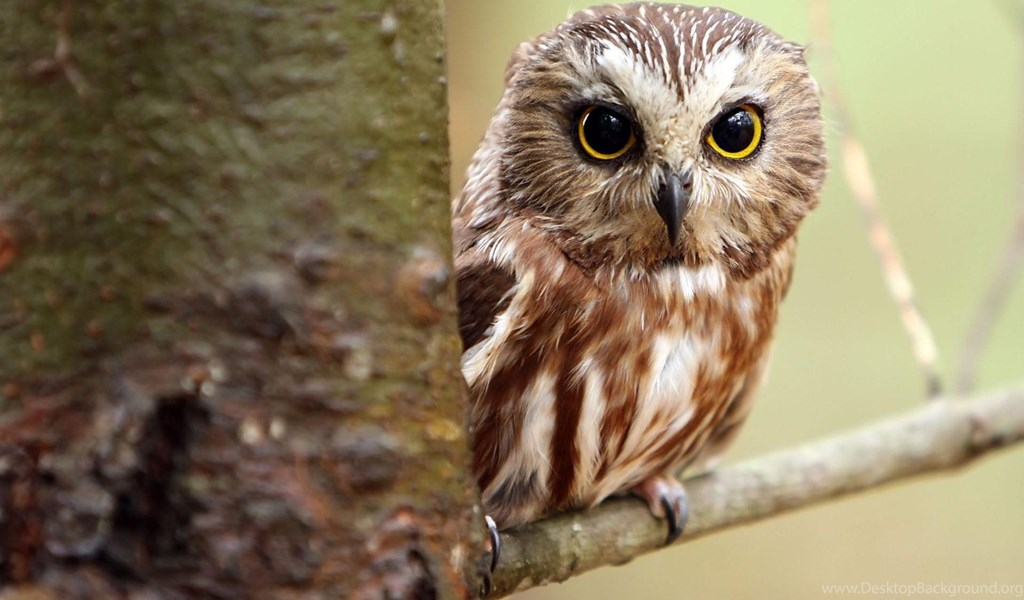 Cute owl wallpapers for iphone desktop background playstation 960x544 voltagebd Images