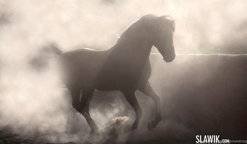 Slawik horse wallpapers horses wallpapers 6070970 fanpop desktop playstation 960x544 voltagebd Image collections