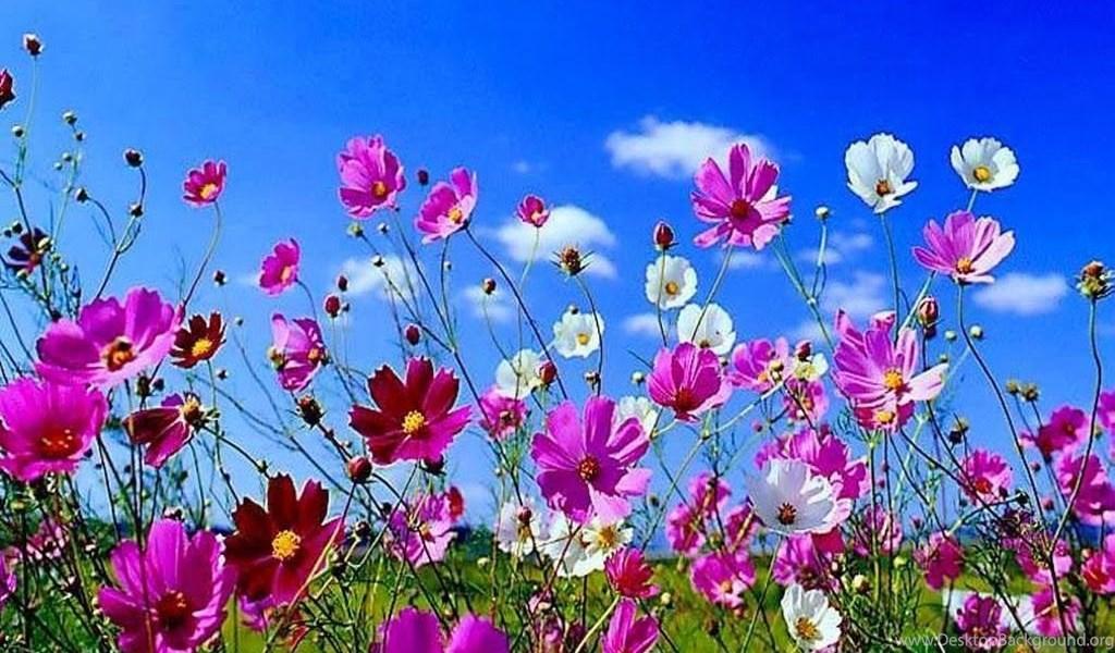 Flowers Desktop Wallpapers Spring Flowers Desktop Wallpapers Jpg