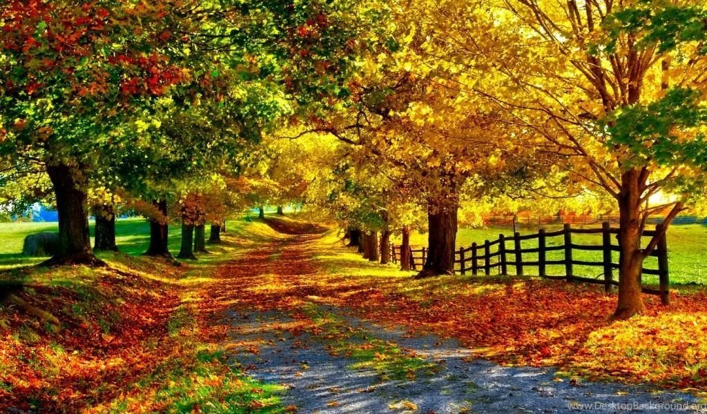 Fall Phone Wallpapers Hd Wallpapers Lovely Desktop Background