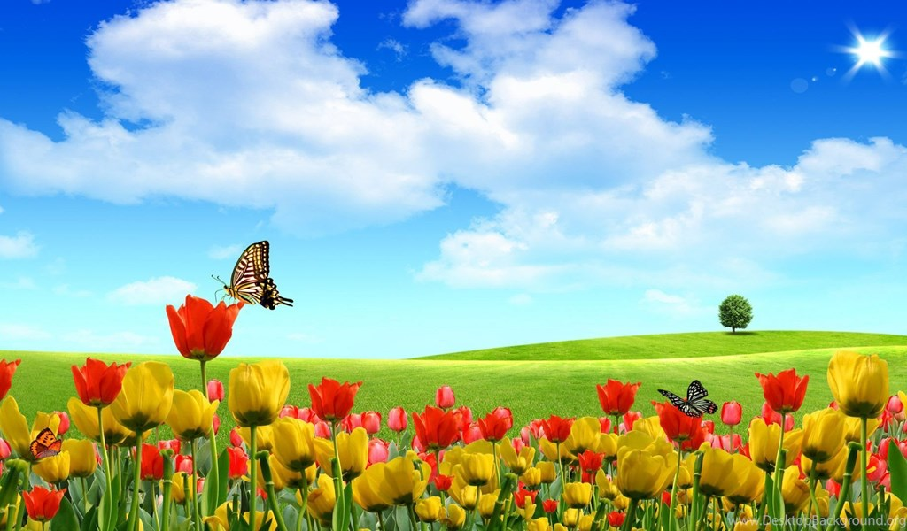 Free summer desktop backgrounds hd wallpapers pretty desktop background mobile android tablet voltagebd