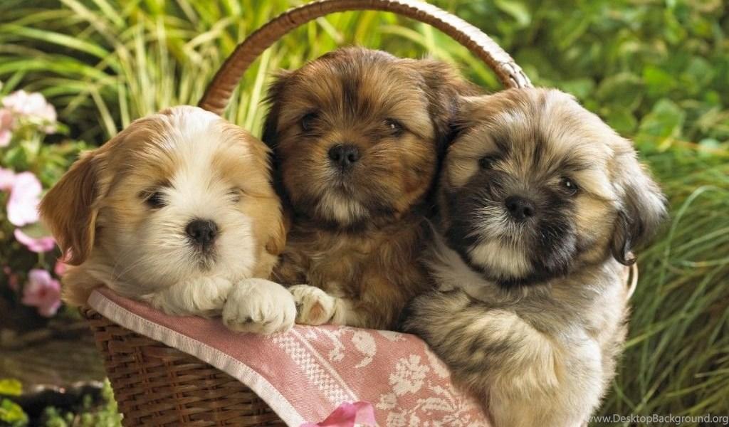 34 Dog & Puppy Chrome Themes, Desktop & IOS Wallpapers Desktop