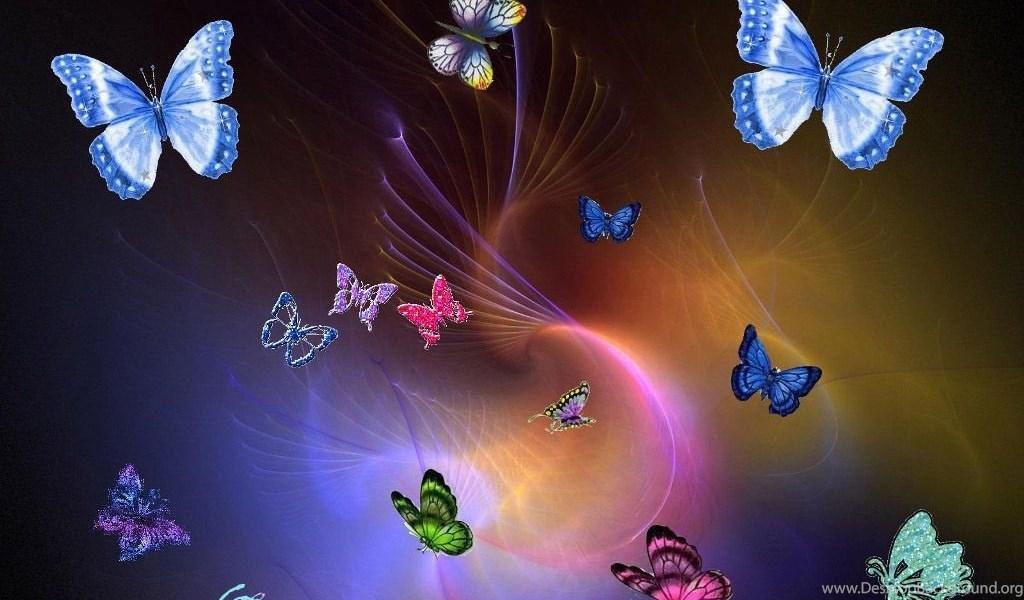 Colourful Butterflies Wallpapers 17060402 Fanpop