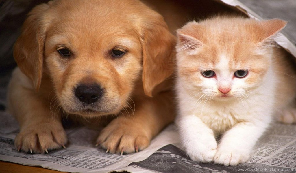 Cats And Dogs Wallpapers Hd Cute Dog And Cat Wallpapers Hd Wallpapers Desktop Background