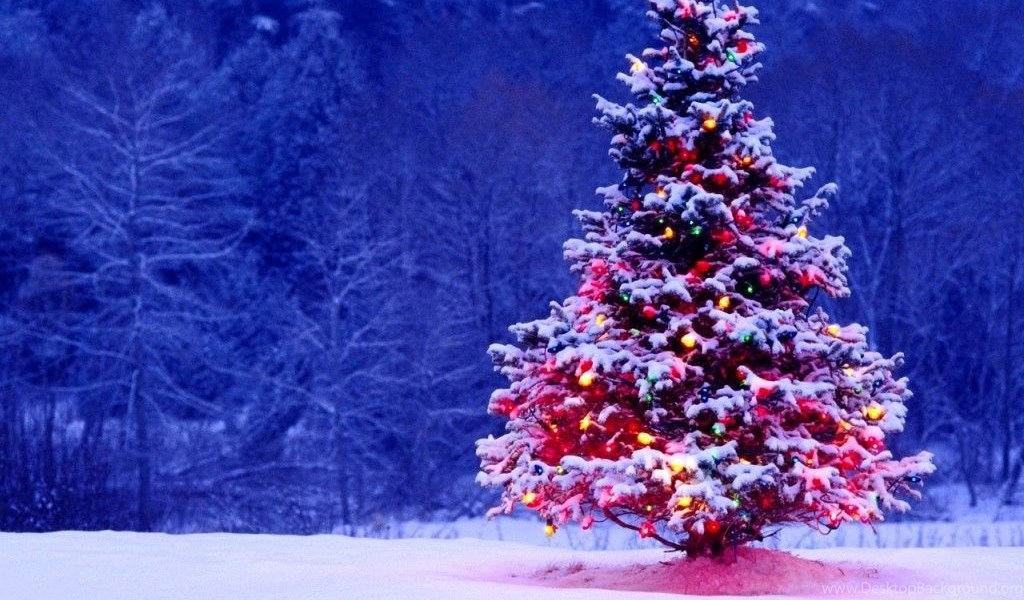Animated Christmas Wallpapers Free Outdoor Christmas Tree The