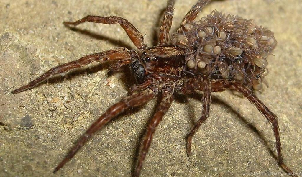 Мерзкие картинки с пауками