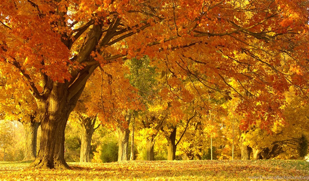 Natural Scene Autumn Background Scenery Nature Wallpapers