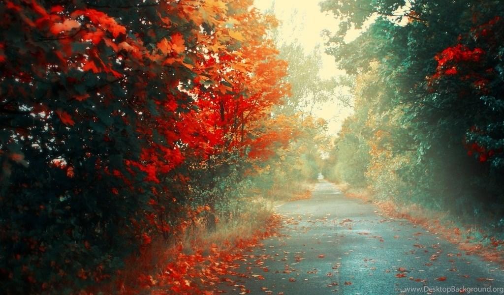 553739 autumn rain hd