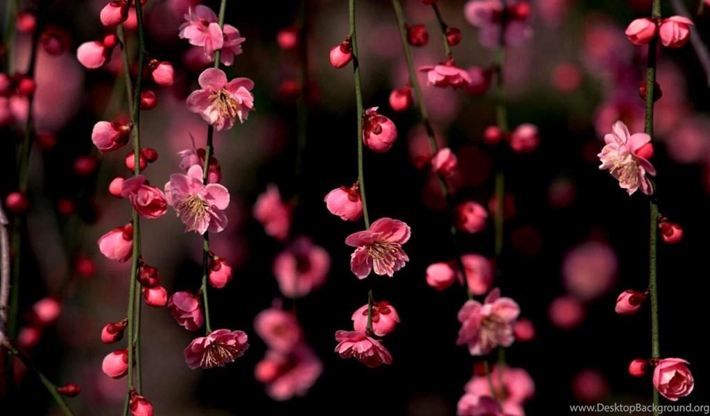 Desktop wallpaper hd 3d full screen flowers 1 HD Widescreen