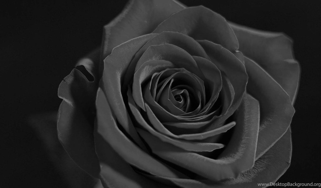 Flowers black and white red rose wallpaper black and white red playstation 960x544 voltagebd Image collections