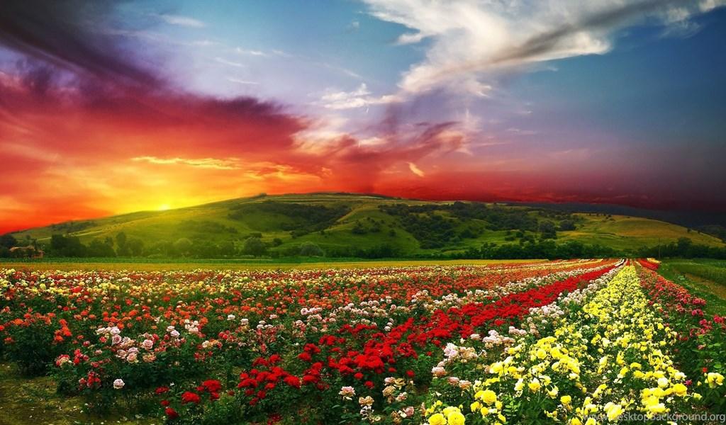 Mountain View Beautiful Scenery Wallpapers HD 4K