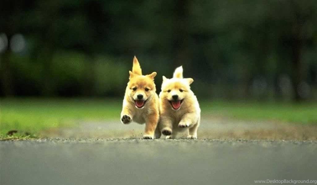 Desktop Cute Dogs Hd Wallpapers 3d Hd Pictures Desktop Background