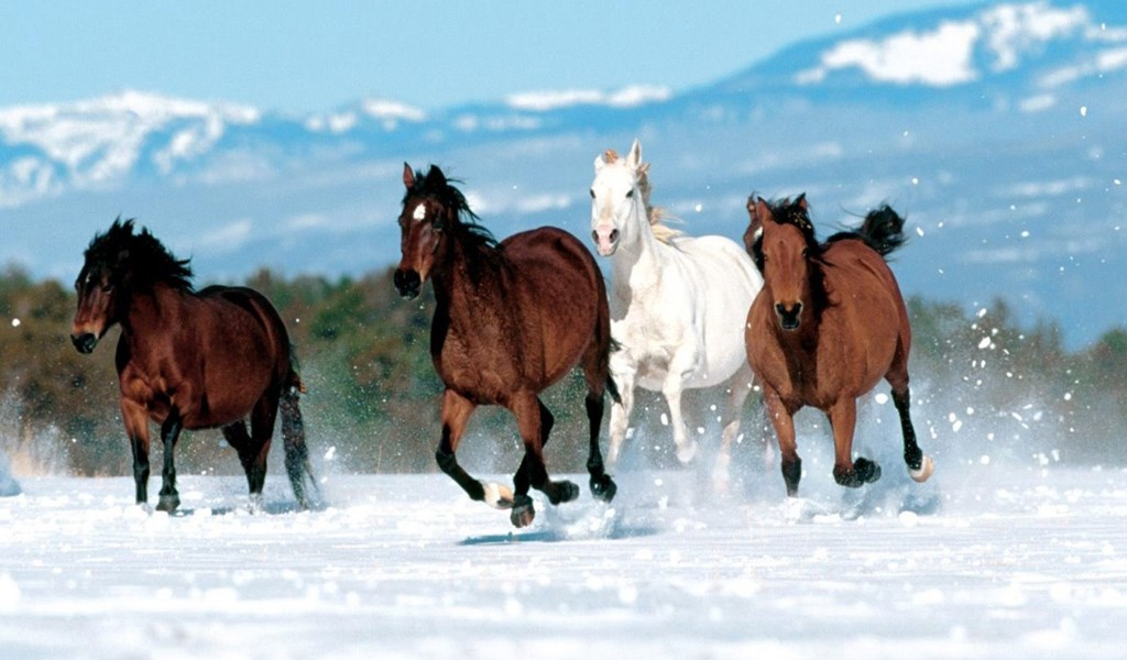 Horse Wallpaper Free 7 24155 Hd Wallpapers Desktop Background
