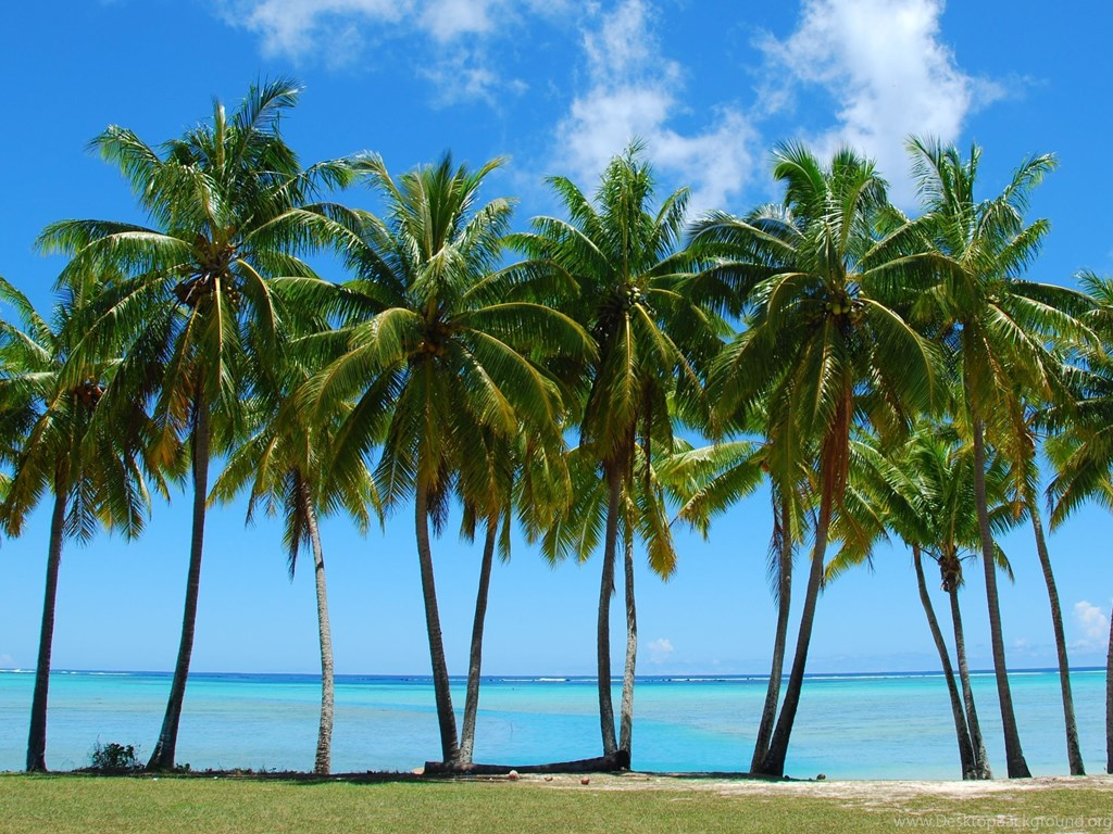 Tumblr palm tree backgrounds picture gallery desktop background - Palm tree wallpaper for android ...