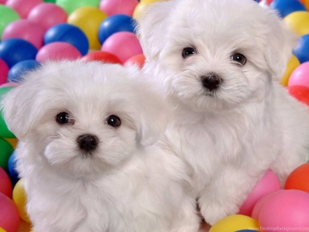 Cute Dogs And Puppies Wallpapers Desktop Background