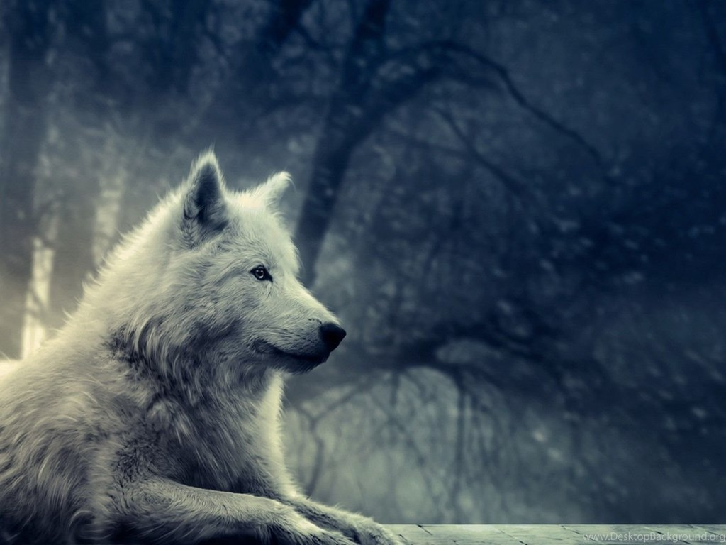 New Ipad Mini 1024 1024 Hd Wallpapers 100 Images Updated: White Wolf Wallpapers All Wallpapers New Desktop Background