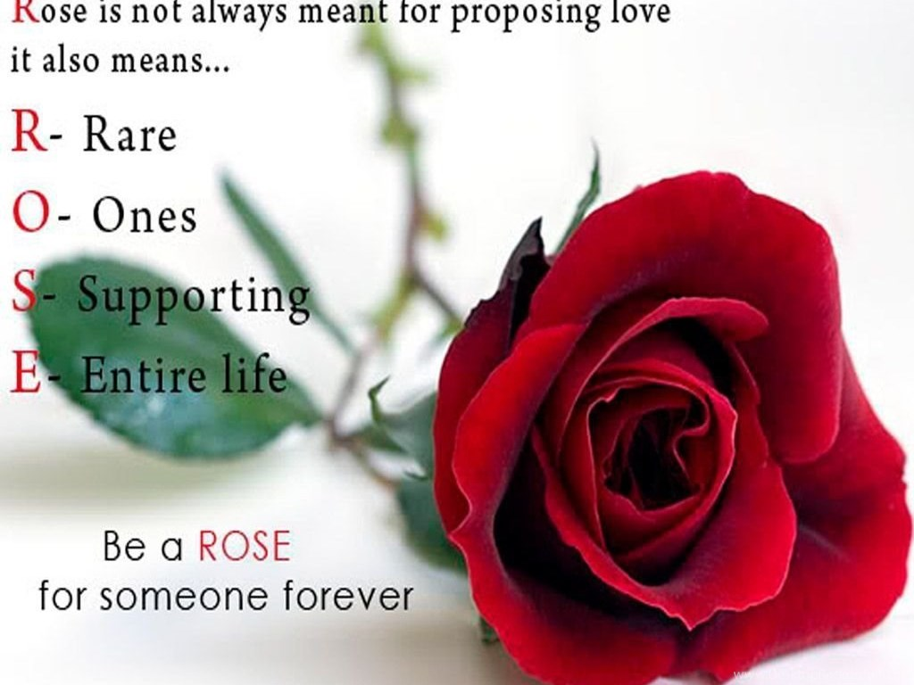 Happy Rose Day Wallpapers Popular Wishes Desktop Background