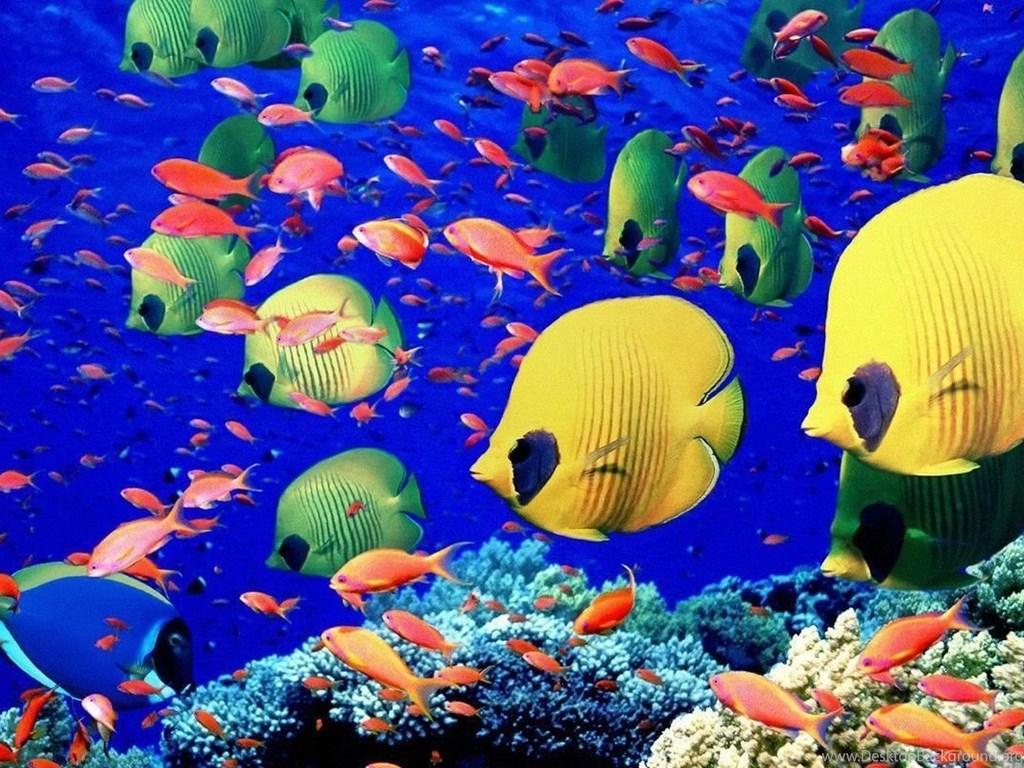 Underwater Fish Desktop Wallpapers Background