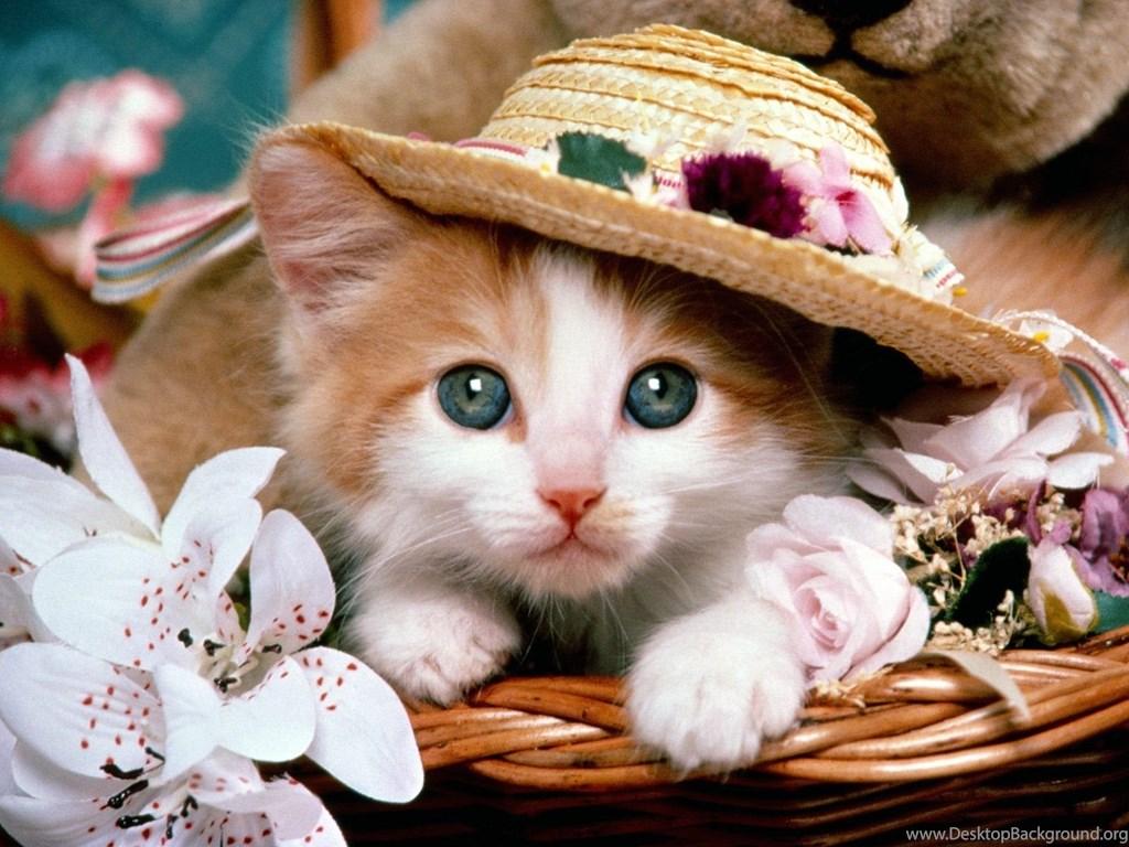 Cute Cats Dogs Wallpaper Images Free Download For Desktop Desktop Background