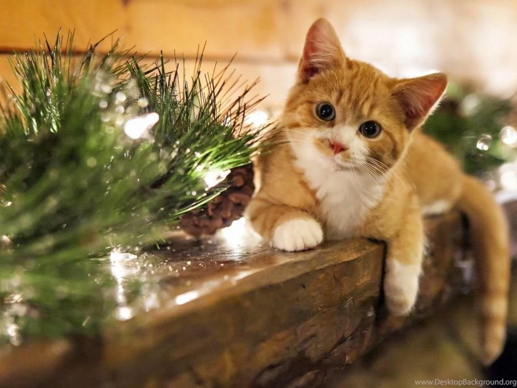 Top 1366x768 Hd Cat Wallpaper Images For Pinterest Desktop Background