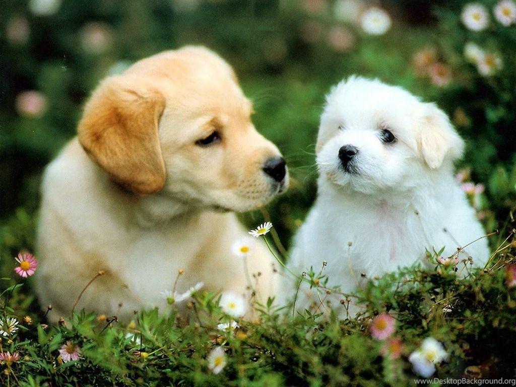 Beautiful Wallpapers Dog Puppies Wallpapers Desktop Background
