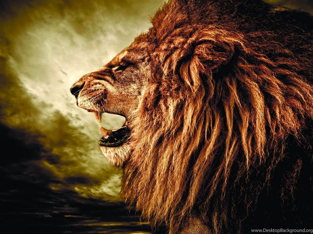 Hd Background Wallpaper 800x600: Lion Wallpapers (2) Wallpapers HD Wallpapers HD 4K