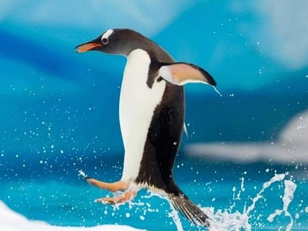 wallpapers iphone 7 jumping penguin 1080 1920 full hd 502 1080 x