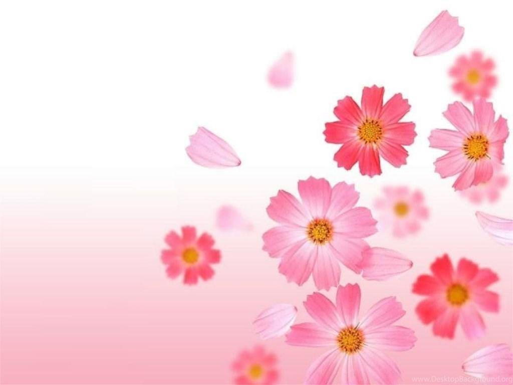 800x880px baby pink wallpapers flowers desktop background fullscreen mightylinksfo