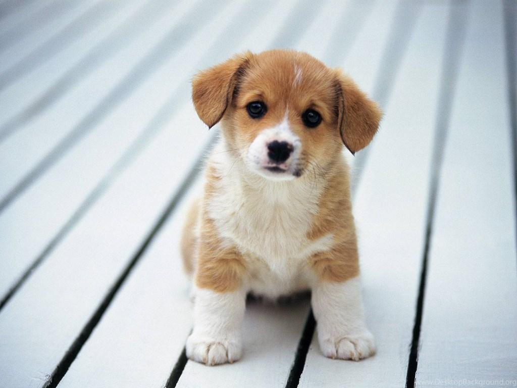 245990 cute wolf pup wallpaper