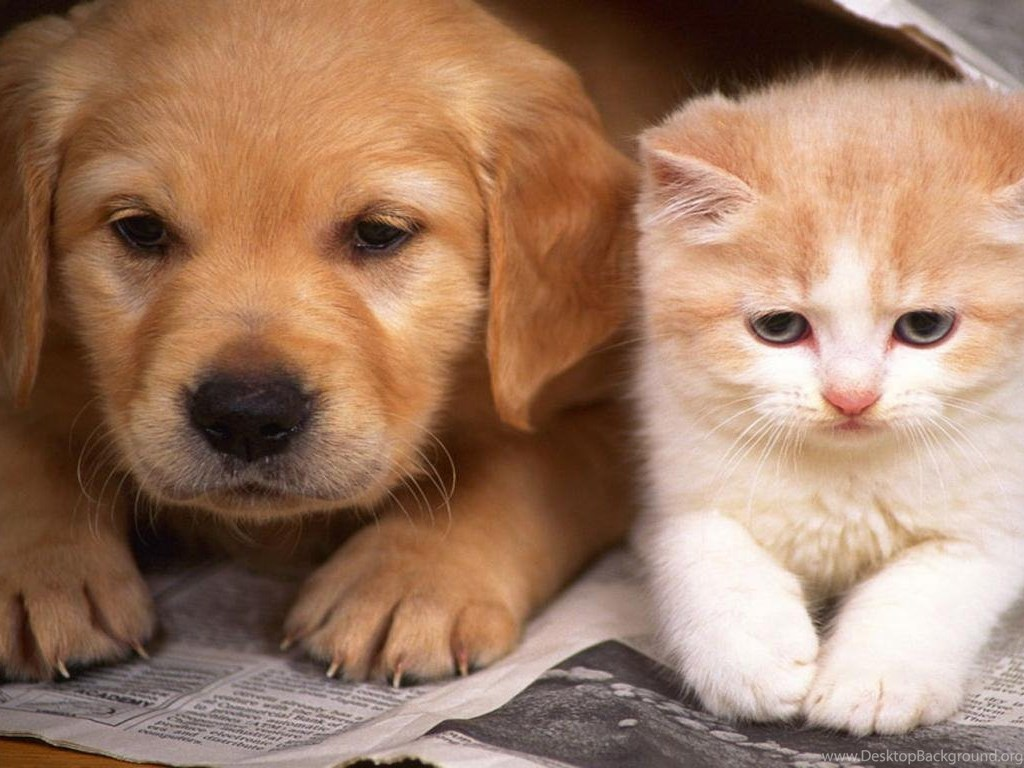 cats and dogs wallpapers hd cute dog and cat wallpapers hd wallpapers desktop background. Black Bedroom Furniture Sets. Home Design Ideas