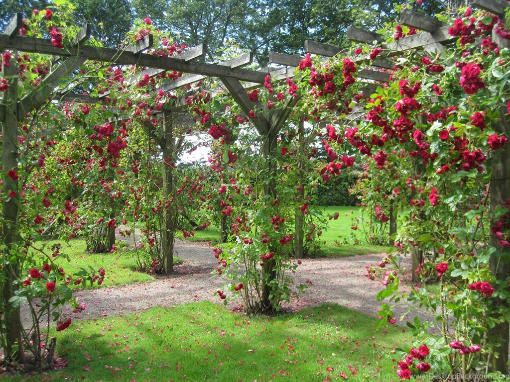 gardens wallpaper: rose garden free hd wallpapers in red yellow