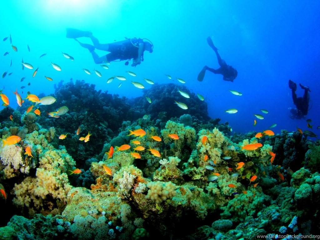 Scuba Diving Underwater Wallpapers Desktop Background