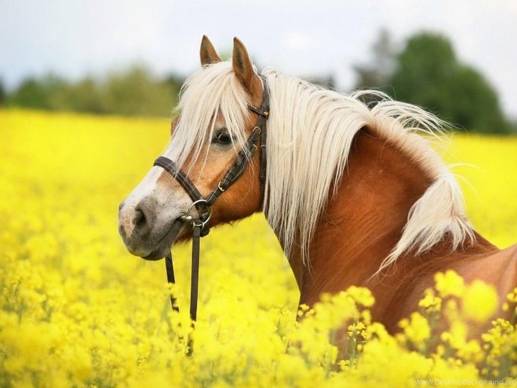 Horses: Beautiful Horse Horses Wallpaper Backgrounds Free ...