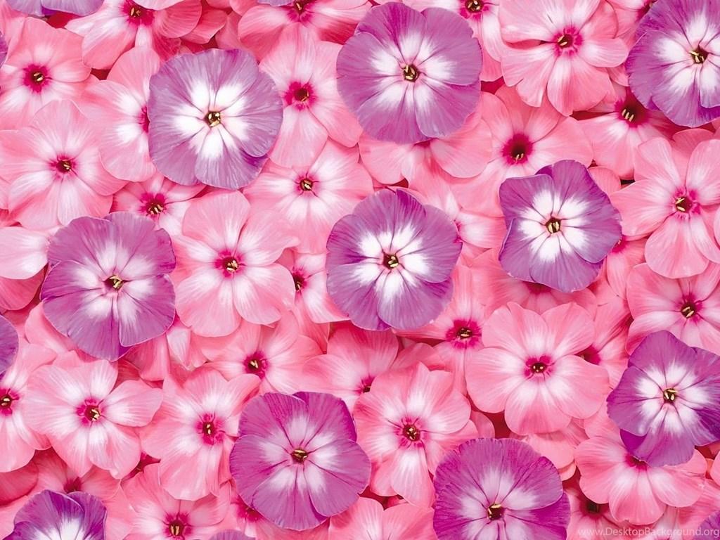 Pink Flowers Wallpapers Free Download 3 Amazing Trends Desktop