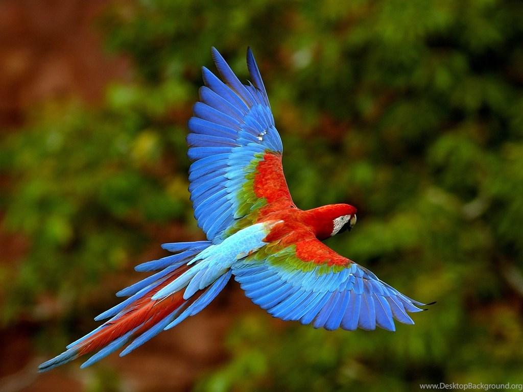 Beautiful Birds Wallpapers Hd Pictures Desktop Background