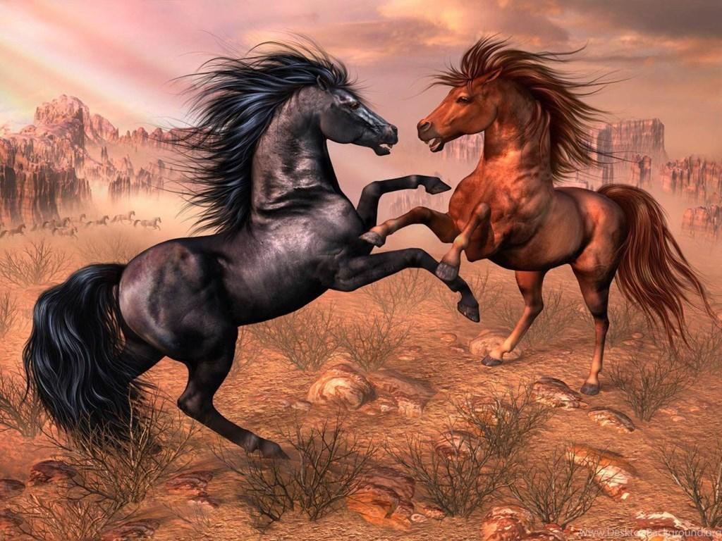 Horses Arabian Horses Animal Art Horse Wallpapers Hd For Hd 16 9 Desktop Background