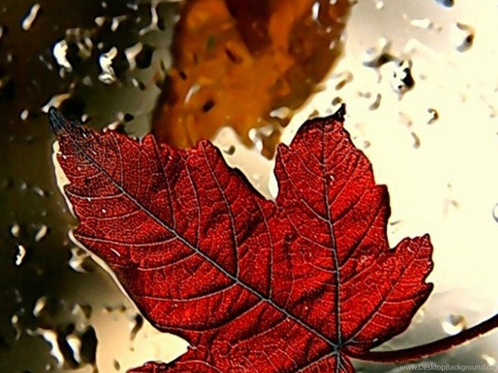 red leaf iphone 6 wallpapers hd and 1080p 6 plus wallpapers desktop