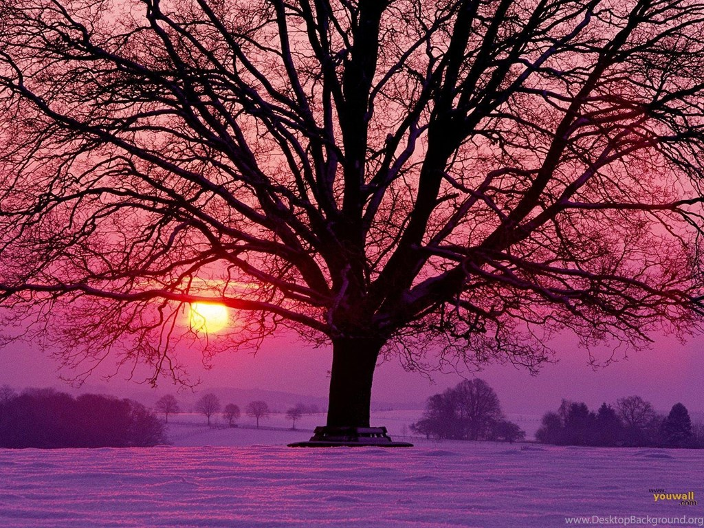Youwall Winter Sunset Wallpapers Wallpaper Wallpapers Free
