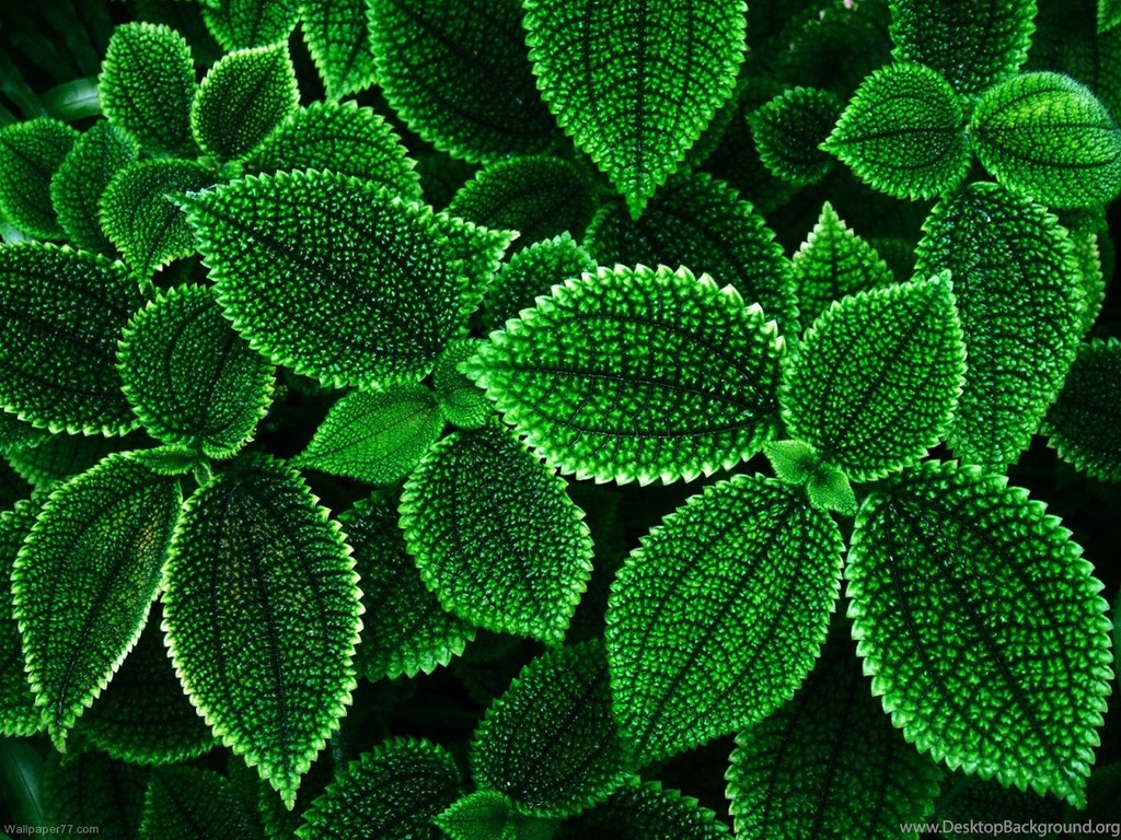 588911 exotic green flower wallpapers flowers wallpapers 1280x960