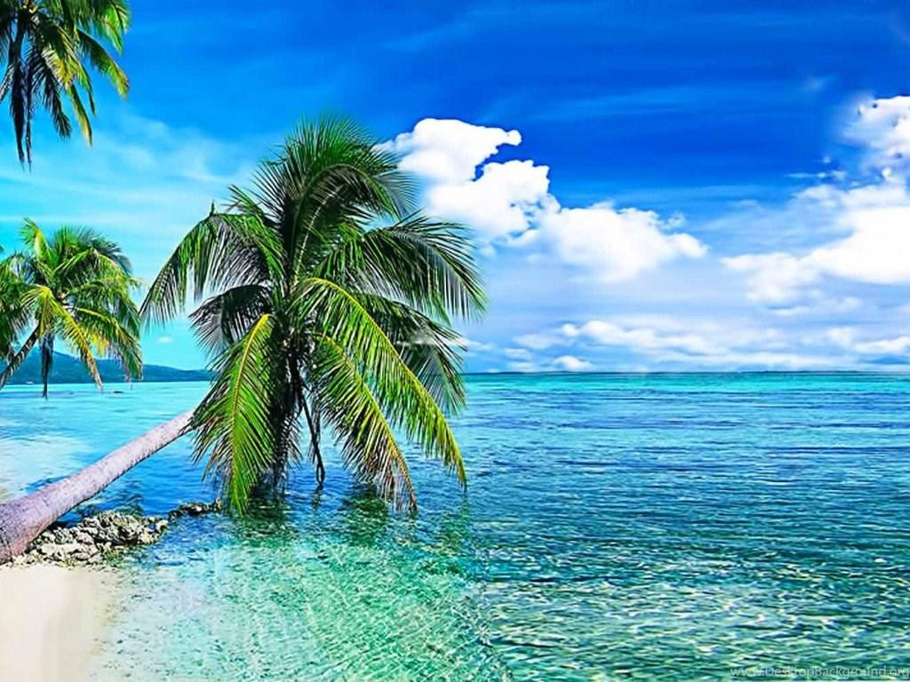 Hd Coconut Tree Seaside Landscape Nature Wallpaper Living: Free Live Wallpapers For Mobile Wallpapers HD Base Desktop
