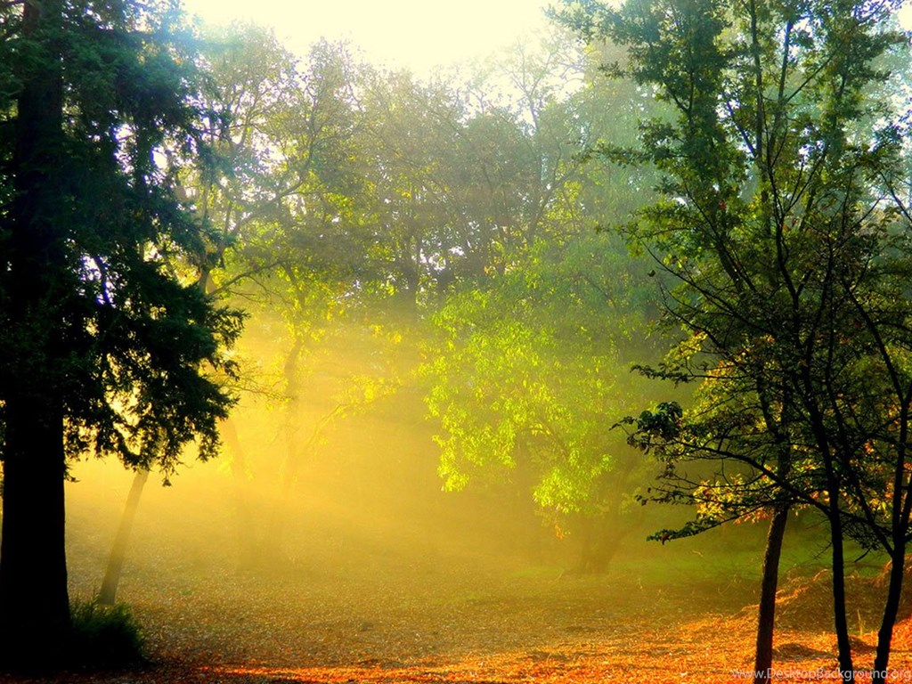 Through The Woods Of The Beautiful Sunshine HD Wallpapers