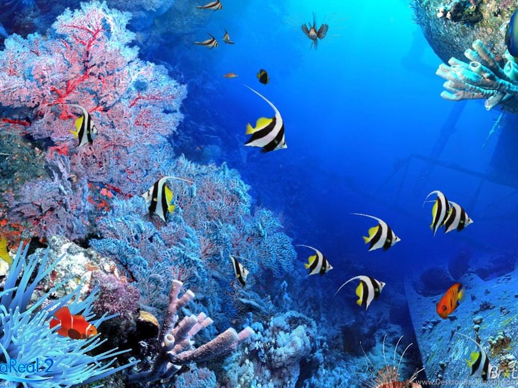 fish aquarium live wallpaper download for pc 3d fish