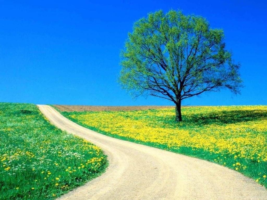 Nature Desktop Backgrounds Hd Free Download Beautiful Nature
