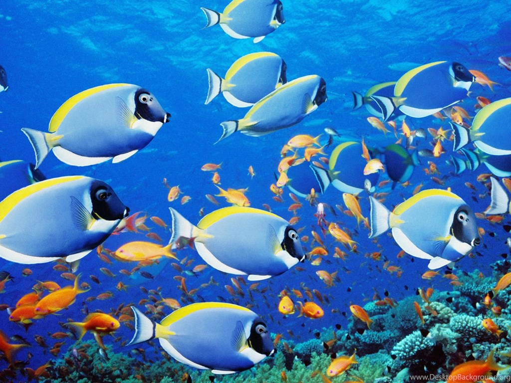 Cool free screensavers animated screensaver fish desktop - Cool anime screensavers ...