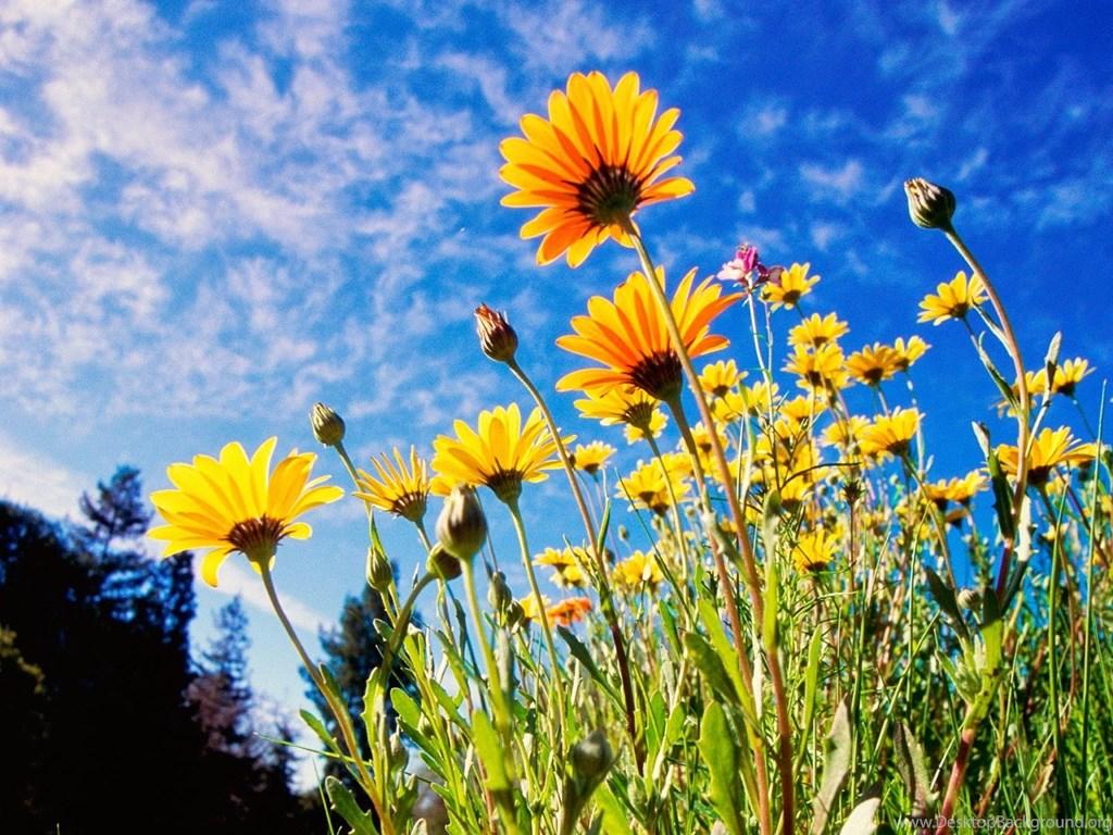 Most Beautiful Flower Wallpapers World Fresh Flowers Desktop Background
