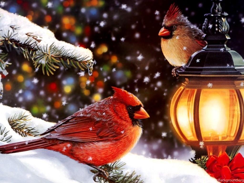 новогоднее поздравление кардинал