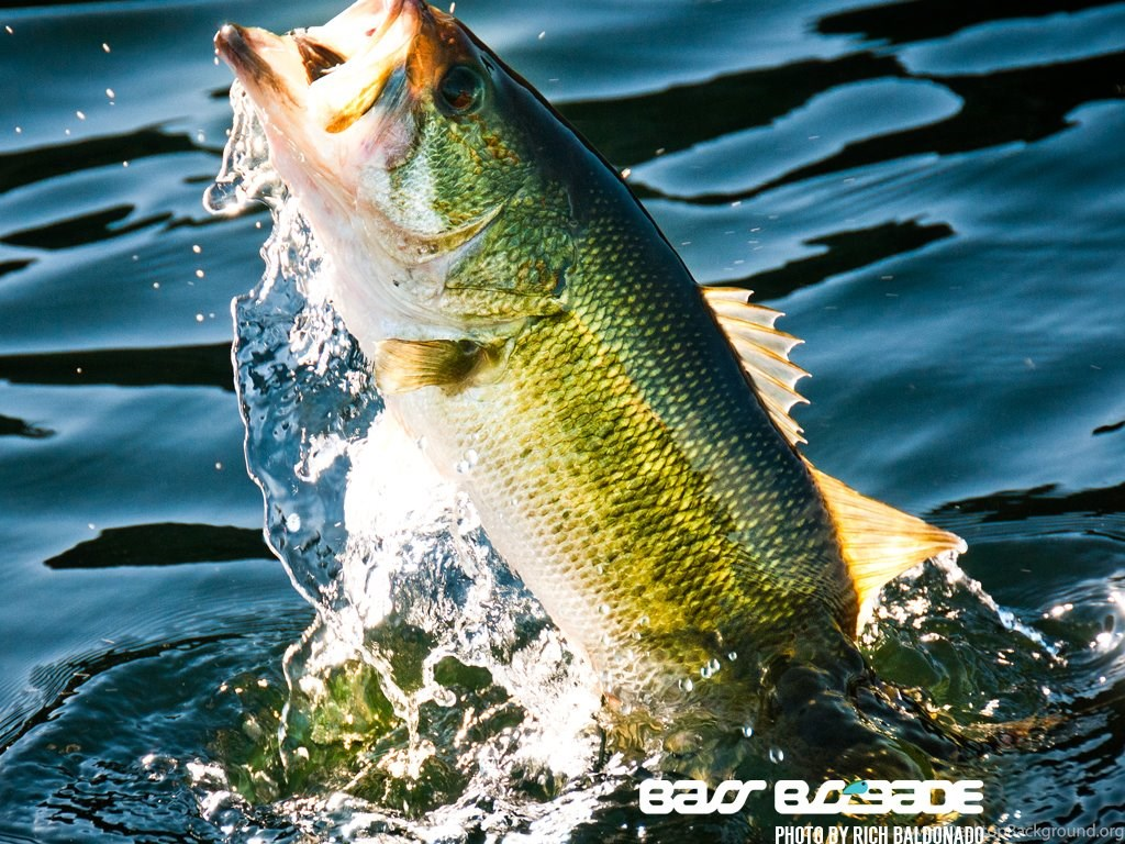 Cool Bass Fishing Wallpapers Image Gallery Photonesta Desktop Background