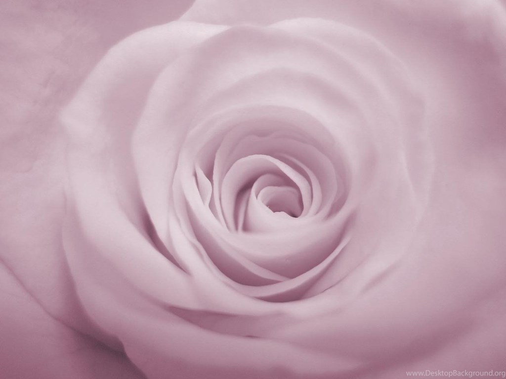 purple rose ppt template backgrounds for powerpoint templates ppt, Powerpoint templates