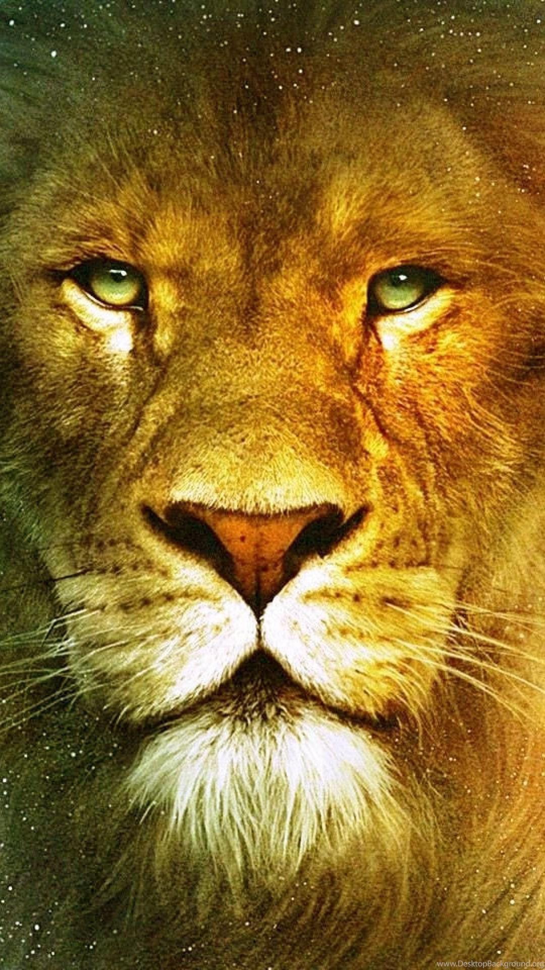 Lion Wallpapers Desktop Background