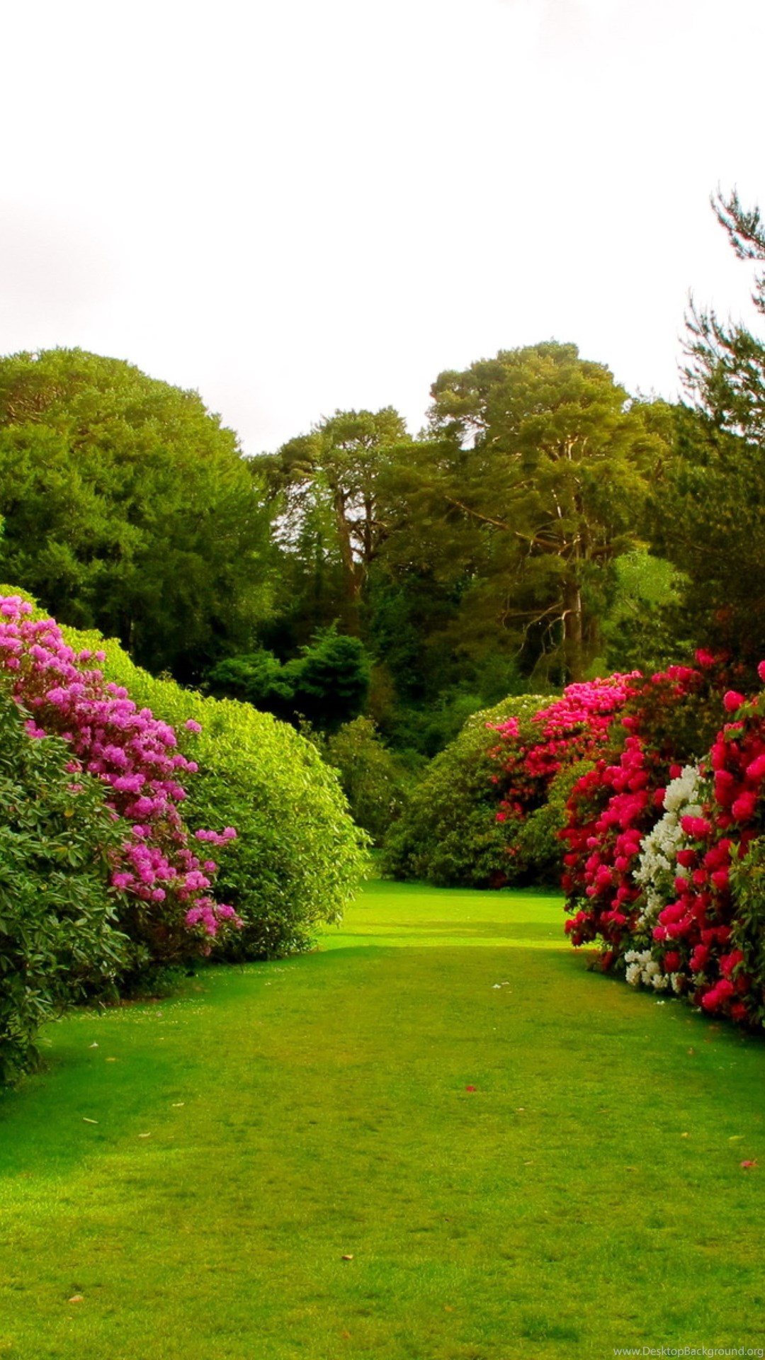 Gardens Wallpaper Beautiful Rose Garden Wallpapers